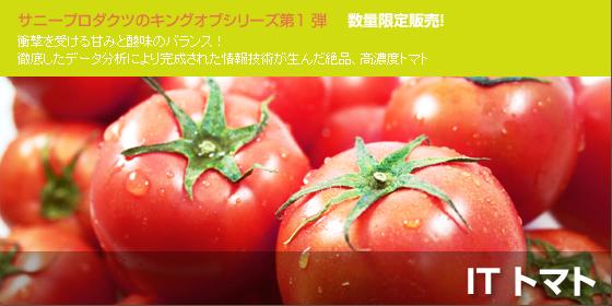 IT トマト